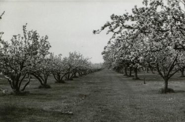 Orchards on The Mash in 1965 | Ann Handscombe