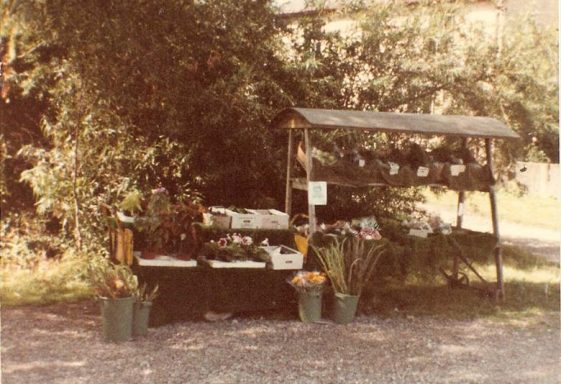 Fieldgate Nurseries