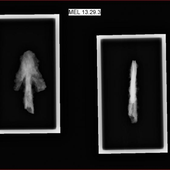 X-ray images of the arrowhead from Context 3 | Julia Park-Newman, Conservation Services