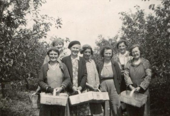 Meldreth Orchards in the 1940s