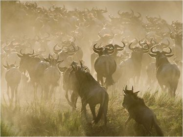 Crossing the Mara   Barbara Stanley