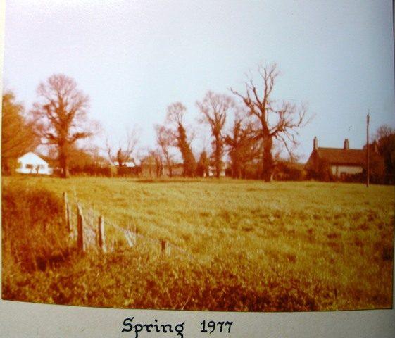 Dutch Elm disease Spring 1977 | Meldreth W.I.
