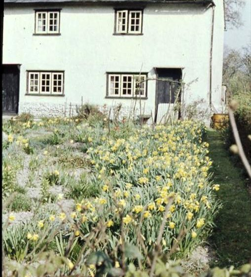 Daffodil Cottage, adjacent to Flambards Close, High Street, Meldreth.  c. 1960 | Photo supplied by Ann Handscombe
