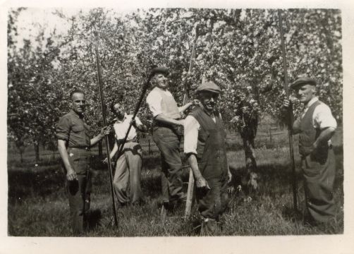 Memories of Fruit Picking in the 1940s