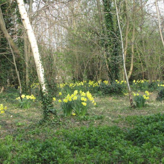 Spring in Melwood | Jim Reid