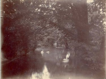 Swans on Court Boating Lake | Meldreth Local History Group