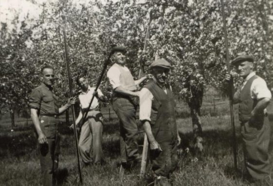 Memories of Meldreth Orchards in the 1920s