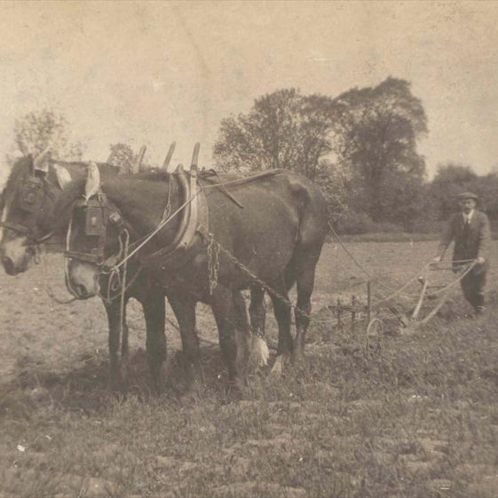 The horses Beauty and Diamond ploughing a field at Northfield House, c.1915 | Photograph supplied by Raymond Course