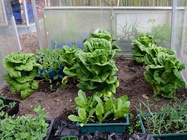 Jim Eggleton's vegetable plot