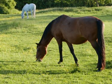 Horses grazing in a North End field, close to where the offence is believed to have occurred | John Crawforth, June 2015