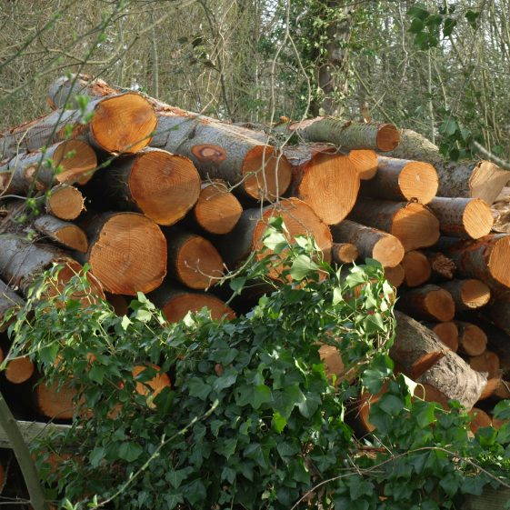 Felled trees from field near the River Mel, possibly poplars | Bruce Huett 2019
