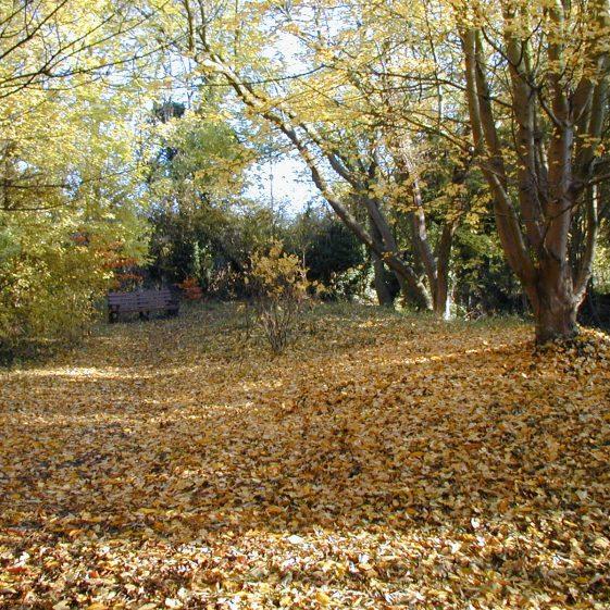 Melwood, Autumn 2003 | Tim Gane