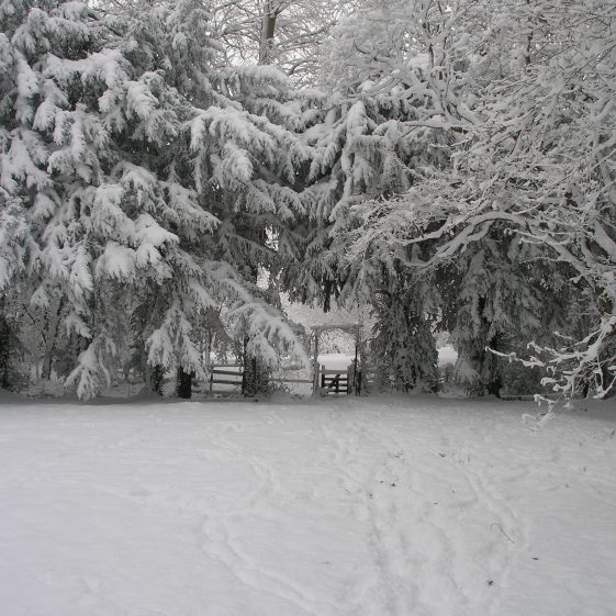 Melwood, Winter 2010 | Tim Gane