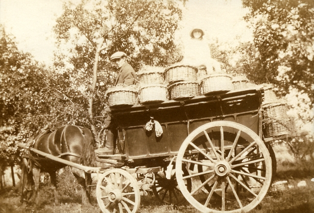 Fruit pickers in George Palmer's Orchard in 1920s | Robert Elbourn